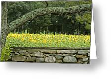 Sunflowers 1 Greeting Card by Ron Smith