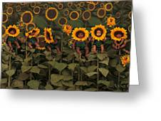 Sunflowers Greeting Card by Anne Geddes