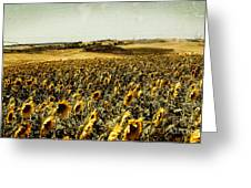 Sunflowers Field  Greeting Card by Anja Freak