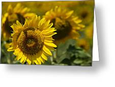 Sunflowers Greeting Card by Lisa Moore