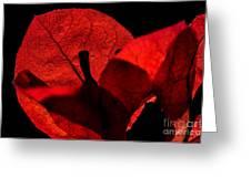 Sunlight Behind The Petals Greeting Card by Kaye Menner