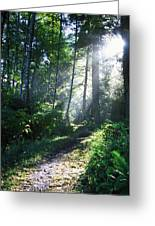 Sunlight Through Trees, Ecola State Greeting Card by Natural Selection Craig Tuttle