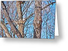 Sunning In The Tree Greeting Card by Aimee L Maher Photography and Art Visit ALMGallerydotcom