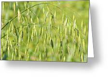 Sunny day at the oat field Greeting Card by Christine Till