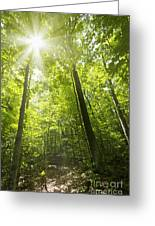 Sunny Forest Path Greeting Card by Elena Elisseeva