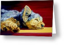 Sunny Patch Yorkshire Terrier Greeting Card by Lyn Cook