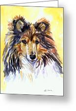 Sunny Sheltie Greeting Card by Lyn Cook