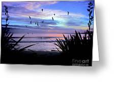 Sunset Down Under Greeting Card by Karen Lewis