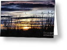 Sunset Grasses Greeting Card by Sandra Cockayne