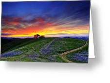 Sunset On Top Of Hillock Greeting Card by Laszlo Rekasi