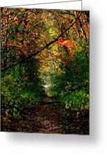Sunset Through Trees Greeting Card by Bridget Johnson
