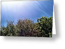 Sunshine Greeting Card by Dana Vogel