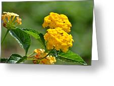 Sunshine Gold Greeting Card by Maria Urso