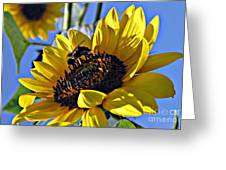 Sunshine Visitor Greeting Card by Louise Peardon