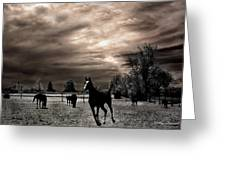 Surreal Horses Infrared Nature  Greeting Card by Kathy Fornal