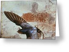 Swallow In Flight Greeting Card by Andy Harmer