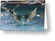 Swallows Drink From Pool Greeting Card by Bryan Allen