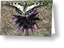 Swallowtail Greeting Card by Eric Kempson