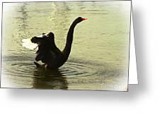 Swan Dance 3 Greeting Card by Blair Stuart