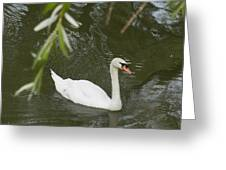 Swan Enjoying A Swim Greeting Card by Corinne Elizabeth Cowherd