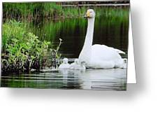 Swan Family Late Summer Greeting Card by Colette V Hera  Guggenheim