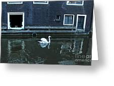 Swan In Amsterdam Canal Greeting Card by Gregory Dyer
