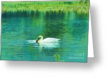 Swan Lake Greeting Card by Judi Bagwell