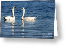 Swan Mates Greeting Card by Sabrina L Ryan