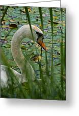 Swan Naturally Greeting Card by Odd Jeppesen