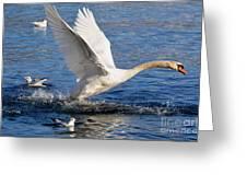 Swan Take Off Greeting Card by Mats Silvan