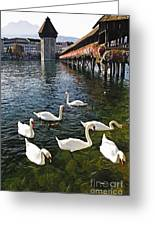 Swans Of The Chapel Bridge Greeting Card by George Oze