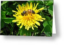 Sweet Nectar Greeting Card by The Kepharts