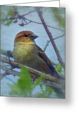 Sweet Song House Sparrow Greeting Card by Cindy Wright