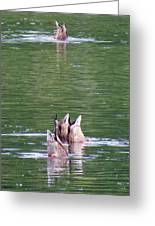 Synchronized Ducking Greeting Card by Chris Anderson