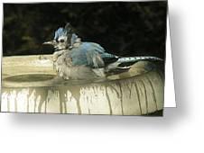 Taking A Bath Greeting Card by Selma Glunn