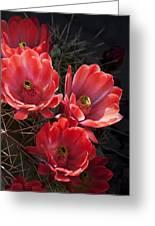 Tangerine Cactus Flower Greeting Card by Phyllis Denton