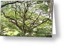 Tangled Hawaiian Tree Greeting Card by Deborah Cummins