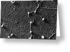 Tem Of Rna Attached To Dna Greeting Card by Omikron