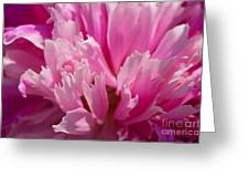 Temperament Greeting Card by Angela Doelling AD DESIGN Photo and PhotoArt