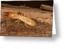 Termite Greeting Card by Ted Kinsman