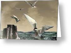 Terns In The Wind Greeting Card by IM Spadecaller