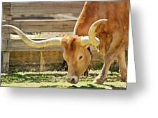 Texas Longhorns - A Genetic Gold Mine Greeting Card by Christine Till