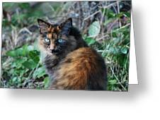 That Cat Look Greeting Card by Judy Arbuckle