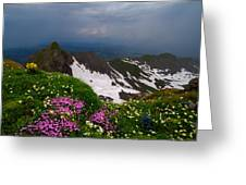 The Alps Wildflowers Greeting Card by Debra and Dave Vanderlaan