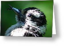 The Baby With Suet Greeting Card by Bonnie Brann