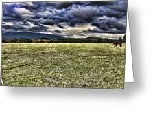 The Cattle Farm Greeting Card by Douglas Barnard