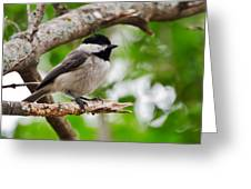 The Chickadee II Greeting Card by Lisa Moore