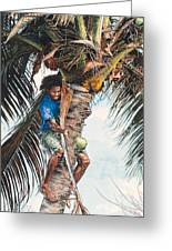 The Coconut Tree Greeting Card by Gregory Jules