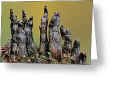The Cypress Knees Chorus Greeting Card by Kristin Elmquist
