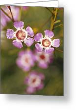 The Delicate Pink Petals Greeting Card by Jason Edwards